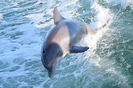 10 Fun Outdoor Things To Do In Miramar Beach